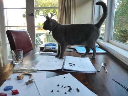 Cat climbing on the table