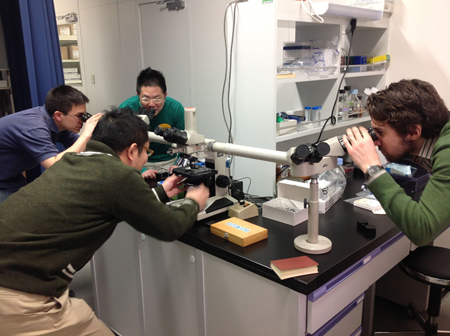 British and Japanese researchers together at the microscope