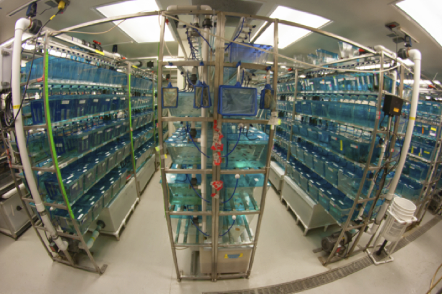 The Moens Lab main fish facility.