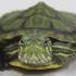 turtle squared
