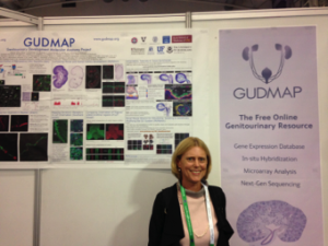 Prof. Melissa Little (University fo Melbourne) at the GUDMAP Exhibitor Stand