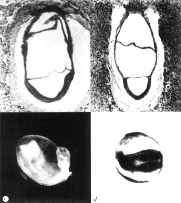 teratology embryos