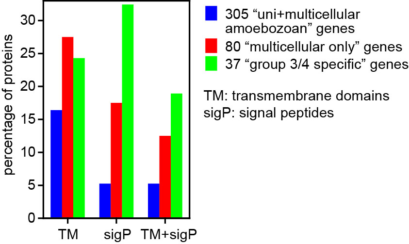 Figure 2. Signal peptide (SigP) and transmembrane (TM) domains. Proteins in the 305 and 80 sets, as well as 37 proteins with limited conservation within Dictyostelia (green) were analysed with Phobius63 for transmembrane domains and signal peptides. Percentages of proteins with either SigP or TM domains, or with both are presented.