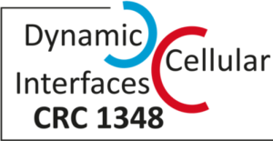 "10 PhD Positions at the CRC 1348 ""Dynamic Cellular"
