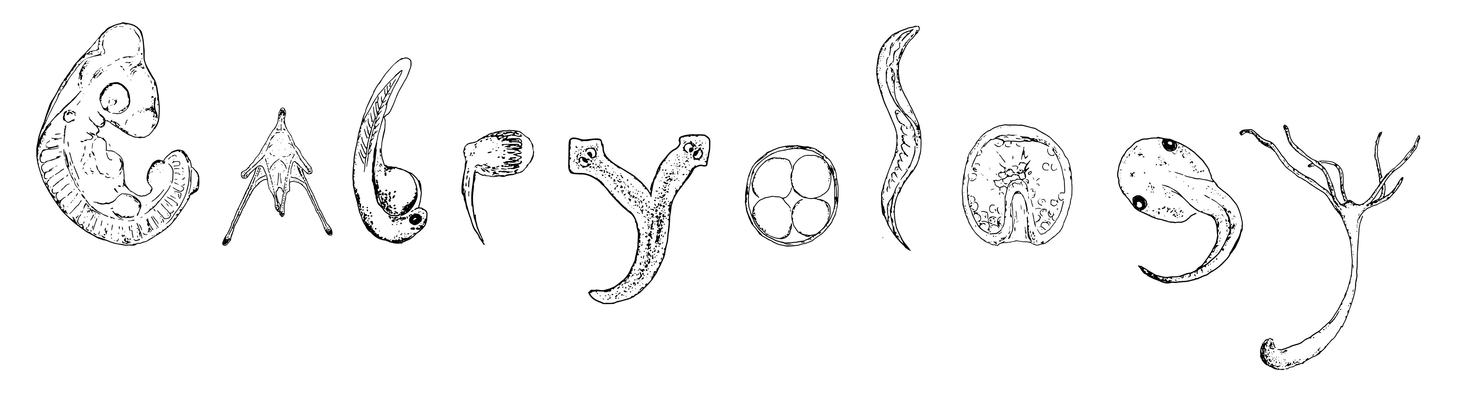 An illustration of some of the organisms we worked on during the course, arranged to spell EMBRYOLOGY.