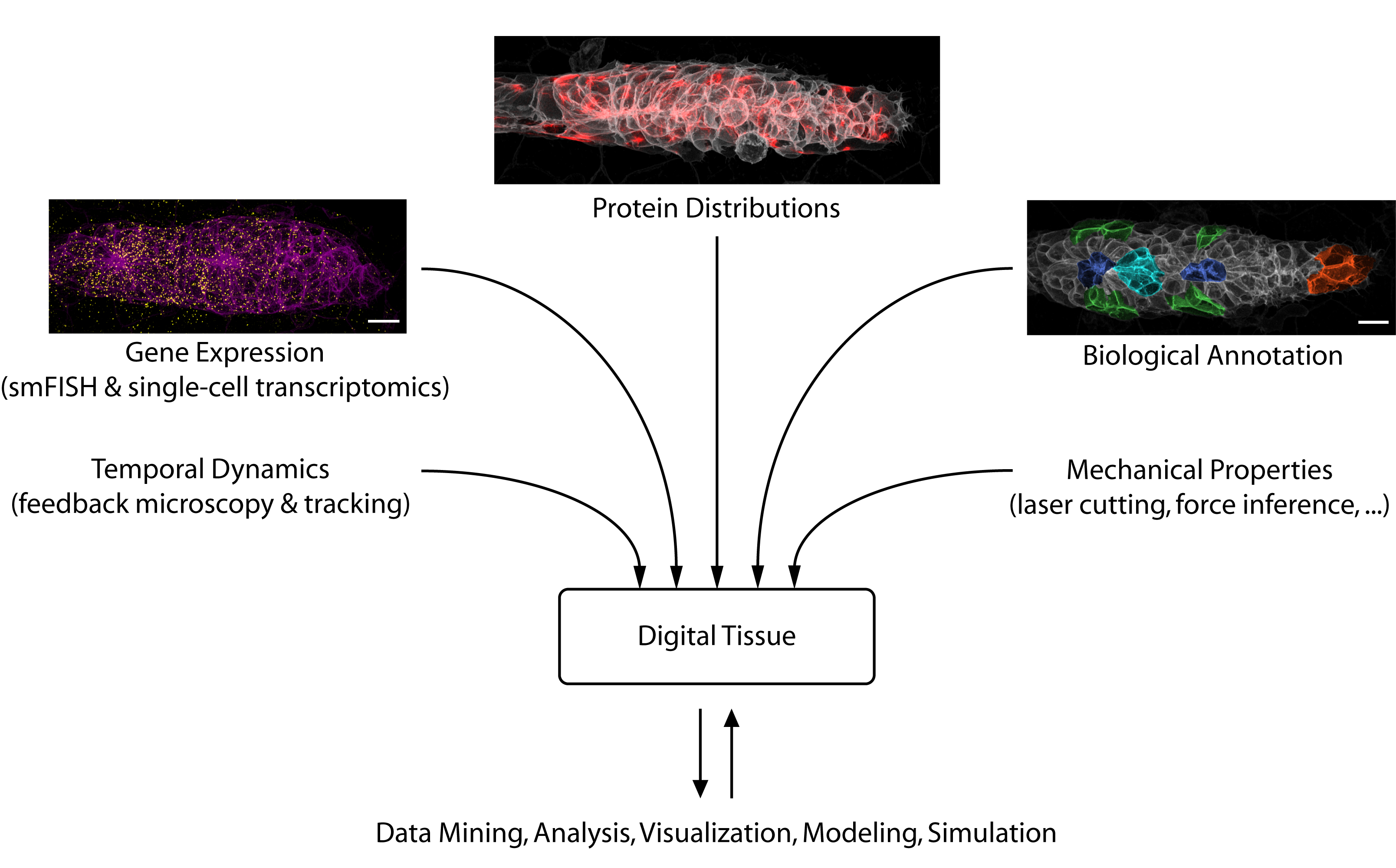 Illustration of Digital Tissue Database
