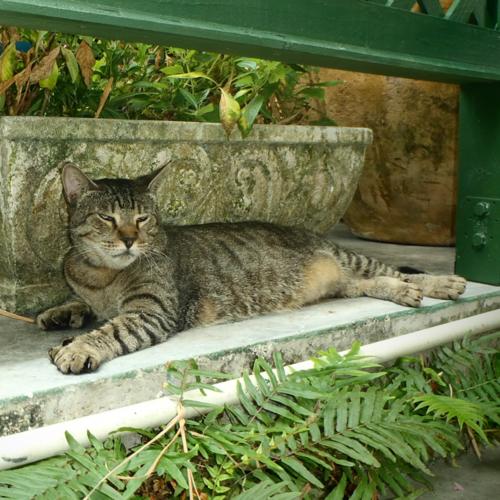 A six toed cat