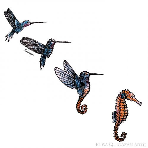hummingbird to seahorse