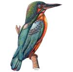 mechanical kingfisher